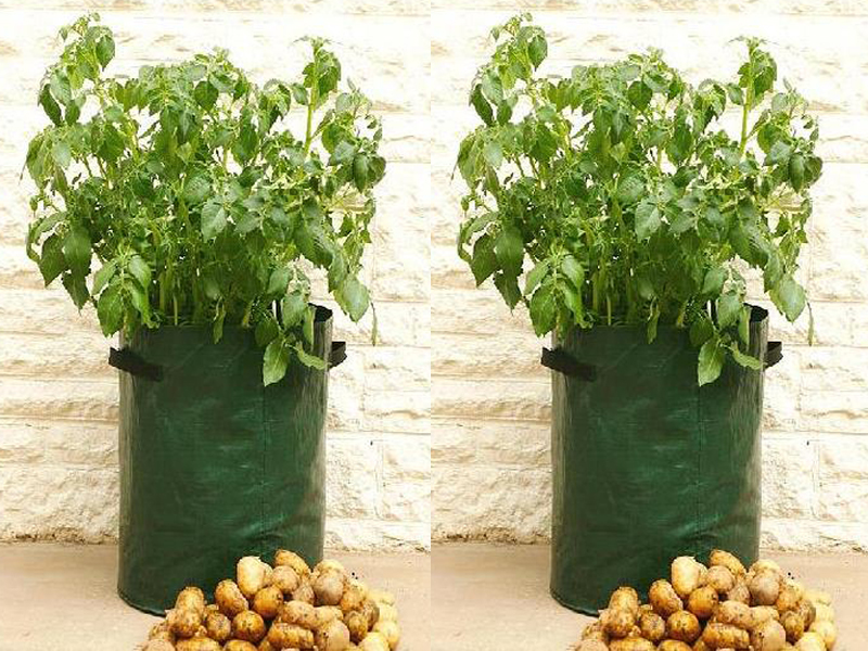 how to grow potatoes in a bag nz