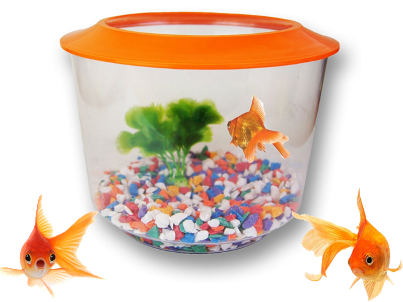 New goldfish starter set aquarium gold fish tank bowl for Fish tank for goldfish